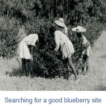 searching-for-blueberries